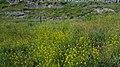 Hrazdan gorge, Yerevan 09.jpg