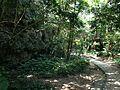 Huge rocks and forest in Sefa-Utaki.JPG