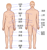 Human body features-ka.svg