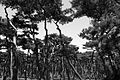 Hwangseong Forest.jpg