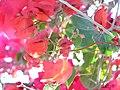 IMG 1290 Flowers.jpg