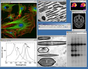 Screenshot of ImageJ