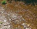 Imbricated streambed of Esopus Creek headwaters.jpg