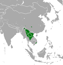 Indochinese Shrew area.png