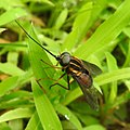 Insects from Madayipara DSCN2251.jpg
