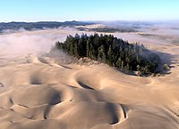 Sand dunes with an island of trees in the middle