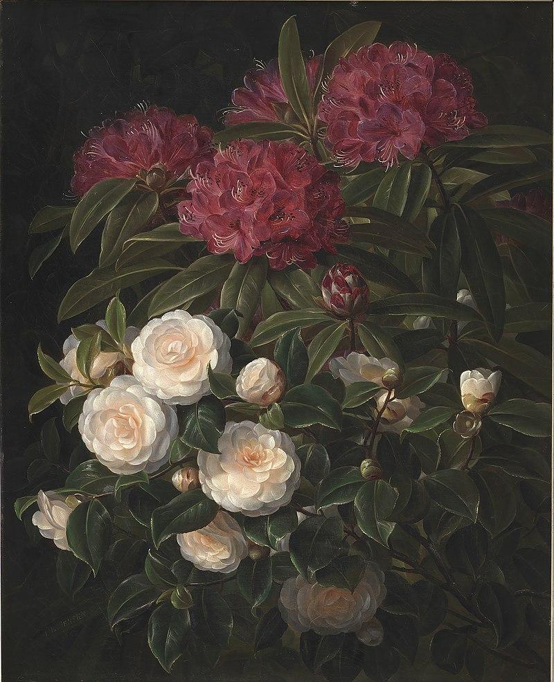 J.L. Jensen - Kamelier og rhododendron - KMS1063 - Statens Museum for Kunst.jpg