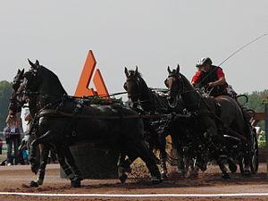 Christoph Sandmann - Christoph Sandmann at the World Equestrian Games 2014 in Caen