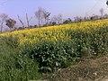 Jallan, Pakistan - panoramio.jpg