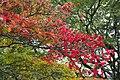 Japan 2011 (6290165722).jpg