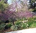 Japanese Fountain, Prospect Park, Redlands, CA 3-2012 (6833466586).jpg