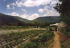 Jarabacoa - Strawberry fields