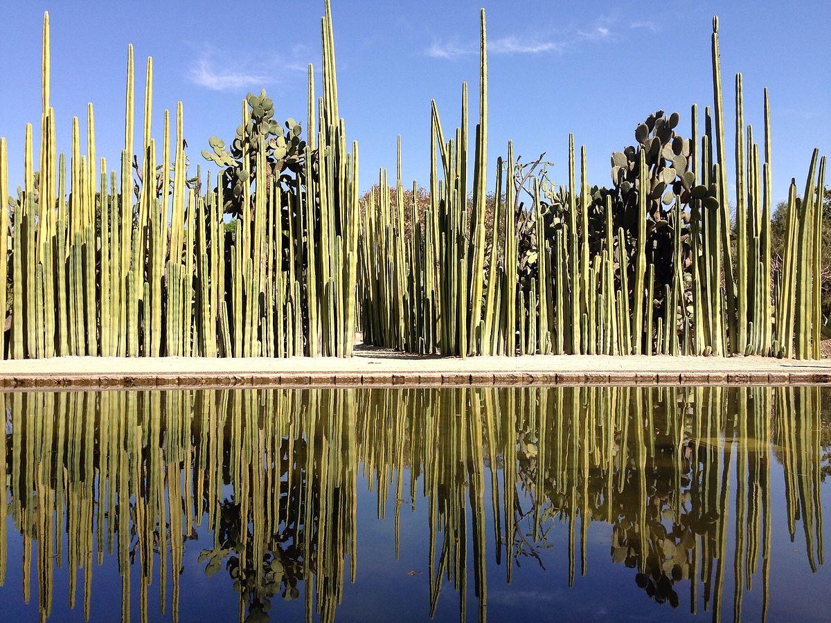 Jard n etnobot nico de oaxaca wikipedia la enciclopedia for Jardin oaxaca