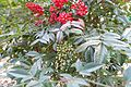 Jardin Hector Malot @ Paris (31467131944).jpg