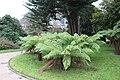 Jardin public de Cherbourg - Fougères.jpg