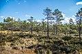 Jersikas pagasts, Latvia - panoramio (15).jpg
