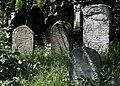 Jewish cemetery Sokolow Malopolski IMGP4722.jpg