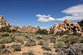 Joshua Tree National Park (3433760460).jpg