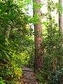 Joyce-kilmer-tree-nc3.jpg
