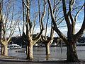 KO flood 2012.JPG