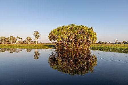 Ngurrungurrudjba (Yellow Water) in Kakadu National Park, Northern Territory, Australia