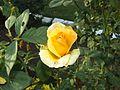 Kashmiri flowers 7.jpg