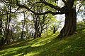 Katsuragaoka Park01s3.jpg