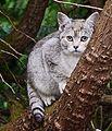 Katzen im Baum (27467837346).jpg