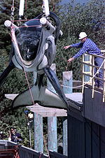 The famous Orca Keiko from the Free Willy movies being prepared for transport.
