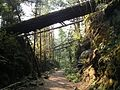 Kettle Valley Trail - Logs laying over path. - panoramio.jpg