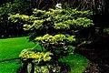 Kildare - Japanese Gardens - geograph.org.uk - 1605056.jpg