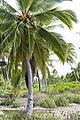 Kiritimati - Christmas Island (14199534809).jpg