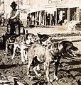 Klondike-dawson-dogs.jpg