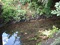 Knapps Brook in Leagrave, Luton LU4.jpg