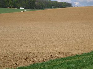 Soil - Loess field in Germany.