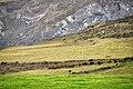 Landewednack TR12, UK - panoramio (10).jpg