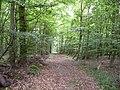 Landschaftsschutzgebiet Pferdebruch Eickholt Melle -Waldanfang- Datei 3.jpg