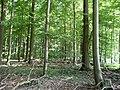 Landschaftsschutzgebiet Waldgebiet bei Neuenkirchen Melle - Im Wald- Datei 4.jpg