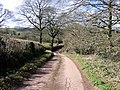 Lane to Tedbridge, Bradninch, Devon - geograph.org.uk - 724978.jpg