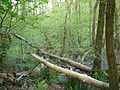 Langenfeld Nähe Haus Graven 0017.jpg