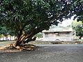Laoac,Pangasinanjf8580 05.JPG