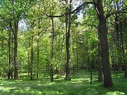 Rezerwat przyrody Las Murckowski w Katowicach