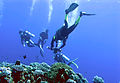 Layang-Layang diving17.jpg