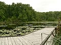 Leśny staw - panoramio.jpg