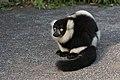 Lemur (24676882848).jpg