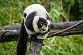 Lemur (26081056468).jpg