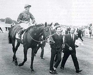 Levmoss Irish Thoroughbred racehorse