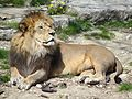 Lion Parc Tête d'Or, Lyon.jpeg