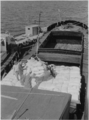 Loading a barge with bagged on the Shatt al-Arab - 1958.png