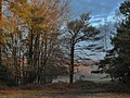 Longdown - New Forest - panoramio.jpg